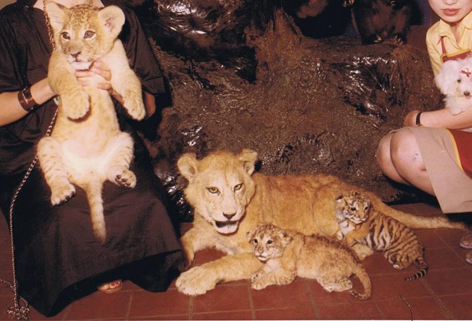 ライオンの写真 門真本町商店会組合